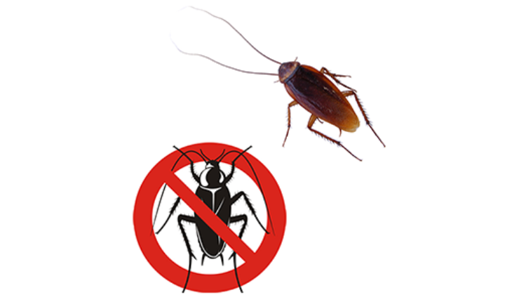 What Are The Reasons For Hiring Professional Pest Control In Southend